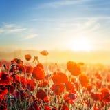 Beautiful red poppy field Royalty Free Stock Photos