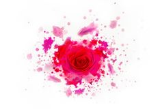Beautiful red real rose from watercolors blots. Abstract concept. Isolated on white stock images