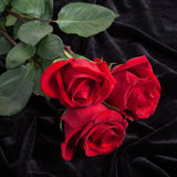 Beautiful red rose on black satin Stock Photos