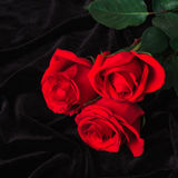 Beautiful red rose on black satin Royalty Free Stock Image