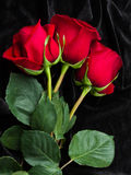 Beautiful red rose on black satin Royalty Free Stock Images
