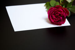 Beautiful red rose and a blank white sheet of paper Royalty Free Stock Photo