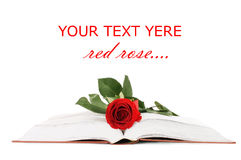 Beautiful red rose on the book Royalty Free Stock Photo