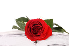 Beautiful red rose on the book isolated Royalty Free Stock Images
