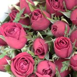 A beautiful red rose bouquet. Close up shot for valentine's day background. Space for text stock image