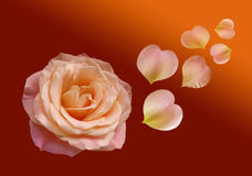 Beautiful red rose on dark background. With flying petal in form heart royalty free stock image
