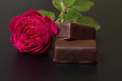 Beautiful red rose with dew drops and chocolate candy Royalty Free Stock Photo