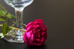 Beautiful red rose with dew drops close to the glass Stock Images