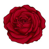 Beautiful red rose with effect watercolor isolated on white background. For greeting cards and invitations of the wedding, birthday, Valentine's Day, mother's Stock Images