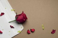 Red rose in an envelope on a light brown background. Beautiful red rose in an envelope on a light brown background Royalty Free Stock Images