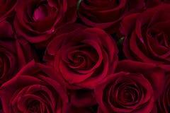 Beautiful red rose flake Stock Photo