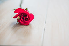 Beautiful Red rose flower on wooden background . Beautiful Red rose flower on wooden background Stock Photos