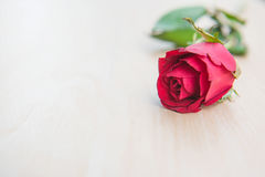 Beautiful Red rose flower on wooden background . Beautiful Red rose flower on wooden background Royalty Free Stock Photography