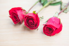 Beautiful Red rose flower on wooden background . Beautiful Red rose flower on wooden background Stock Image