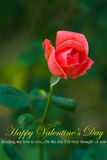 Beautiful red rose. On green background Royalty Free Stock Images