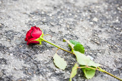 Beautiful red rose with green leaves left on the street - diagonal composition. Beautiful red rose with green leaves left on the street stock photos
