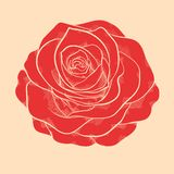 Beautiful red rose in hand-drawn graphic style in  Royalty Free Stock Image