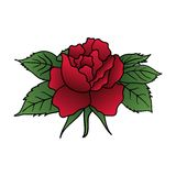 Beautiful red rose isolated Stock Photos