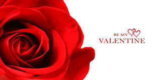 Beautiful red rose isolated on white Royalty Free Stock Photography