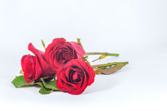 Beautiful Red Rose Isolated Stock Images