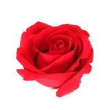 Beautiful red rose isolated on white background Stock Photos