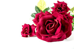 Beautiful red rose isolated on white background Royalty Free Stock Photo