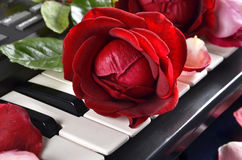 A beautiful red rose Stock Image