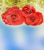 Beautiful red rose on magical background Royalty Free Stock Image