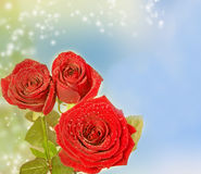 Beautiful red rose on magical background Royalty Free Stock Photography