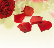 Beautiful red rose on magical background Stock Photos