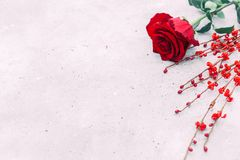 Free Beautiful Red Rose On Wooden Background With Copy Space. Royalty Free Stock Images - 108064459