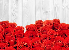 Beautiful red rose over white wooden background Stock Photos