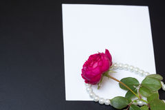 Beautiful red rose with pearls on blank white sheet paper Stock Photography