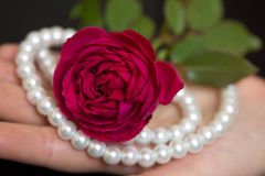 Beautiful red rose with pearls in a female hand Royalty Free Stock Photo