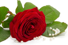 Red Rose With Pearl Necklace On A Red Silk Royalty Free ...
