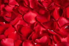 Beautiful red rose petals as background stock photography