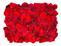 Beautiful red rose petals background. On white stock photos