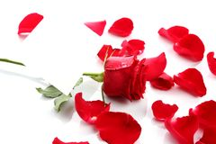 Beautiful red rose petals with blank paper Royalty Free Stock Photos