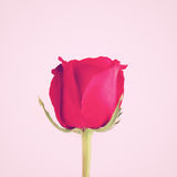 Beautiful red rose with retro effect Royalty Free Stock Photography