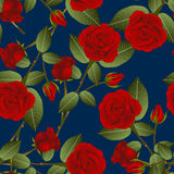 Beautiful Red Rose - Rosa on Indigo Blue Background. Valentine Day. royalty free illustration
