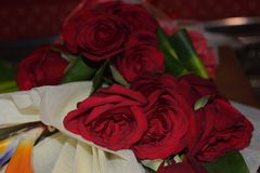 Beautiful Red rose with selective focus royalty free stock photos