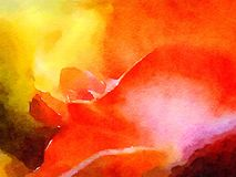 Abstract Red Rose Royalty Free Stock Images