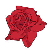 Beautiful red rose,  on white background. Botanical silhouette of flower. Flat stylization color. Vector illustration Stock Photo