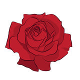 Beautiful red rose,  on white background. Botanical silhouette of flower. Flat stylization color. Vector illustration Stock Image