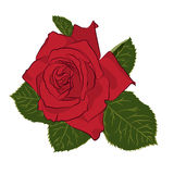 Beautiful red rose,  on white background. Botanical silhouette of flower. Flat stylization color. Vector illustration Royalty Free Stock Photo