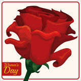 Beautiful Red Rose for Women's Day, Vector Illustration Royalty Free Stock Photo