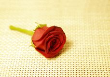 A beautiful red rose on yellow background Royalty Free Stock Images
