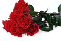 Beautiful Red Roses Royalty Free Stock Images