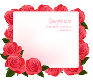 Beautiful red roses,  Royalty Free Stock Images