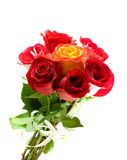 Beautiful red roses Stock Images